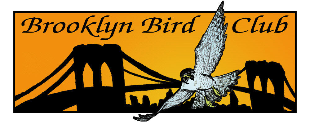 Image result for brooklyn bird club logo