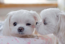 This is what you call… PUPPY LOVE ♥  Fill yourself with more kawaii images only here at Kawaii Blast, where kawaiiness keeps on blasting!