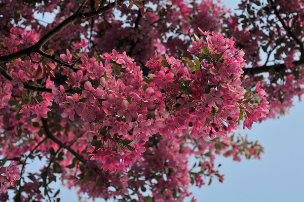 pink heaven