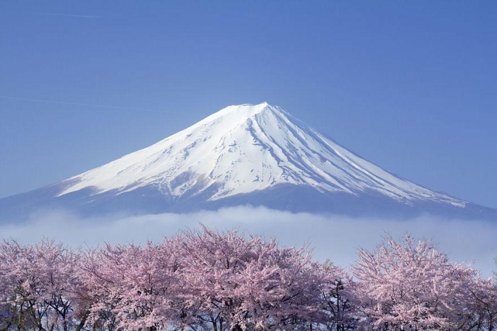 As floradas de cerejeiras mais bonitas em todo o mundo 11