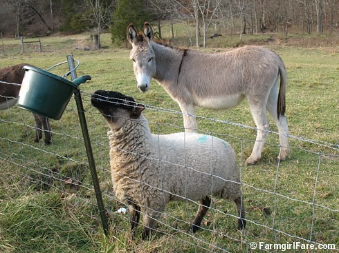 The Daily Donkey 90