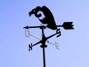 avvoltoio2