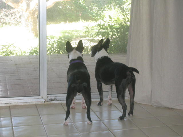 checking out the backyard