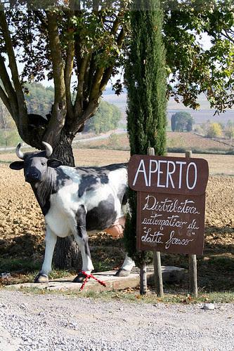 Distributore automatico di latte fresco