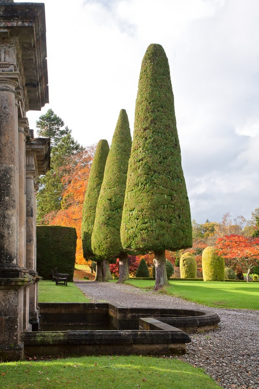 Magnificent Topiary Trees