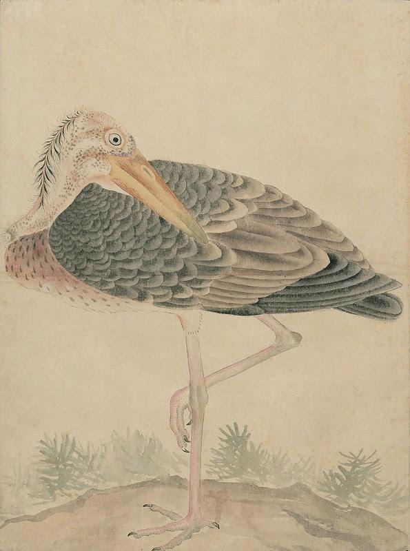 Ink + Watercolour  Bird sketch y
