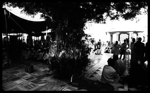 The Gondi  Tree of Progeny Taragadh by firoze shakir photographerno1