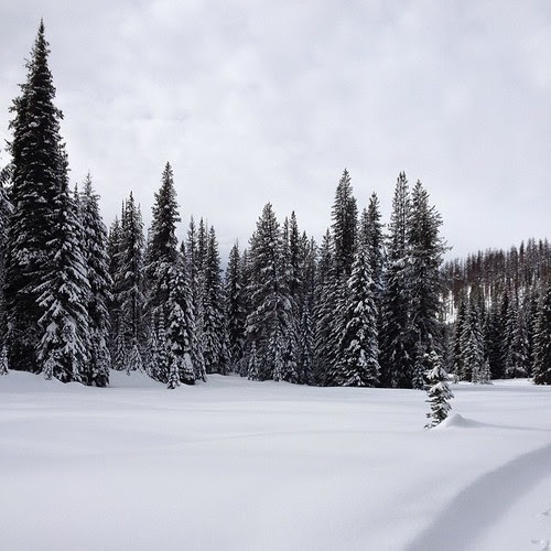 We went cross country skiing today at Lolo Pass!! It was beautiful and I only fell a little