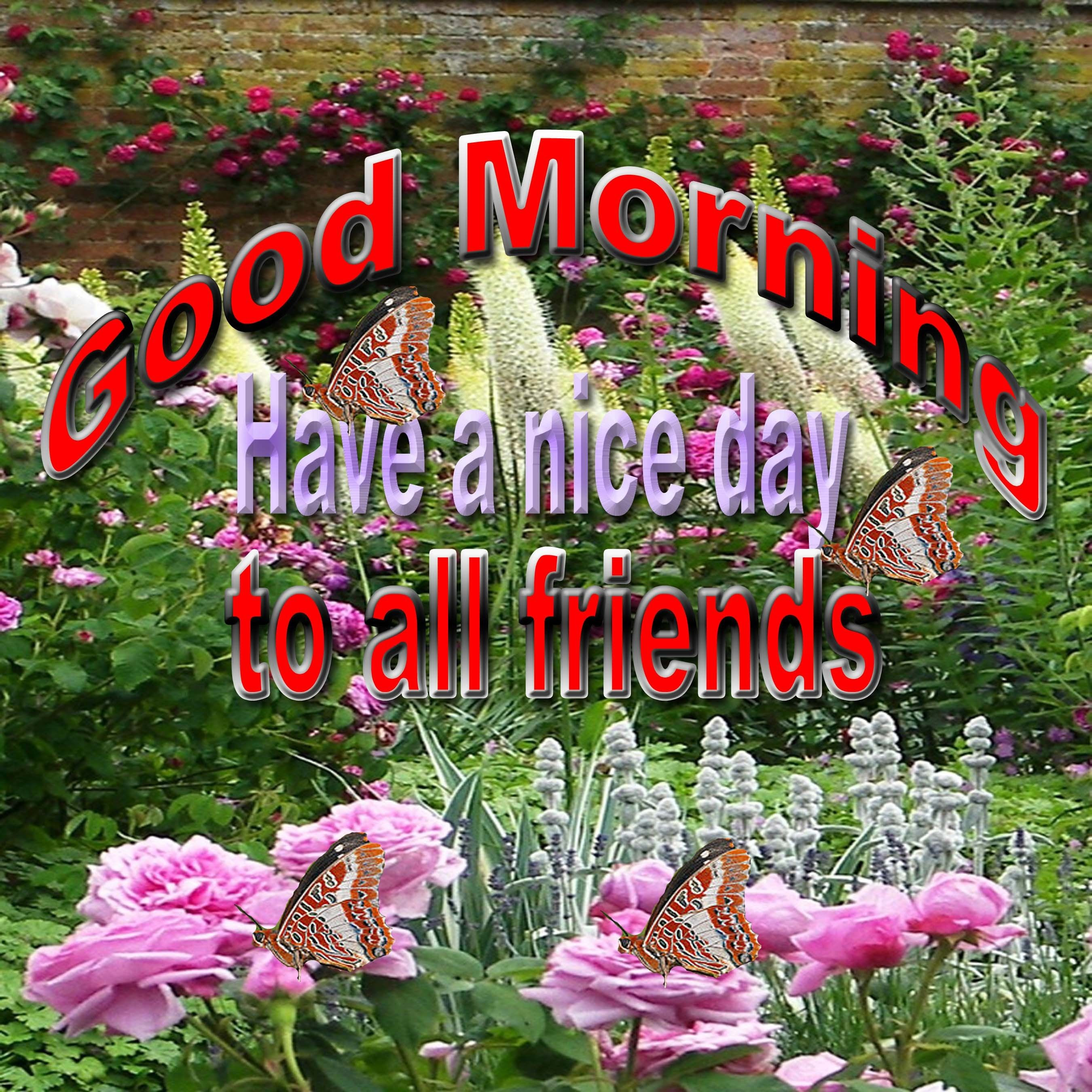 Good Morning Have A Nice Day To All Friends Pictures Photos And