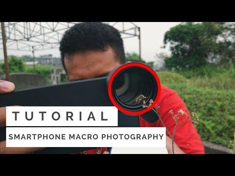 Maco dengan Kamera HP