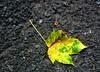 fall :: høst 16-09.08