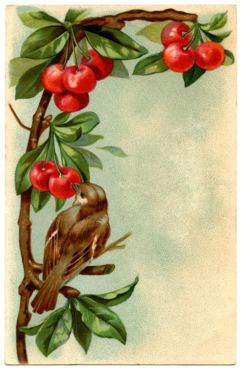 Beautiful Vintage Bird with Cherries   The Graphics Fairy