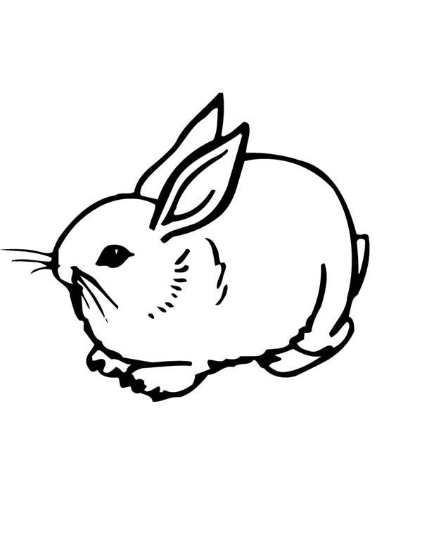 Realistic Image of A Sweet Little Bunny Coloring Page ...