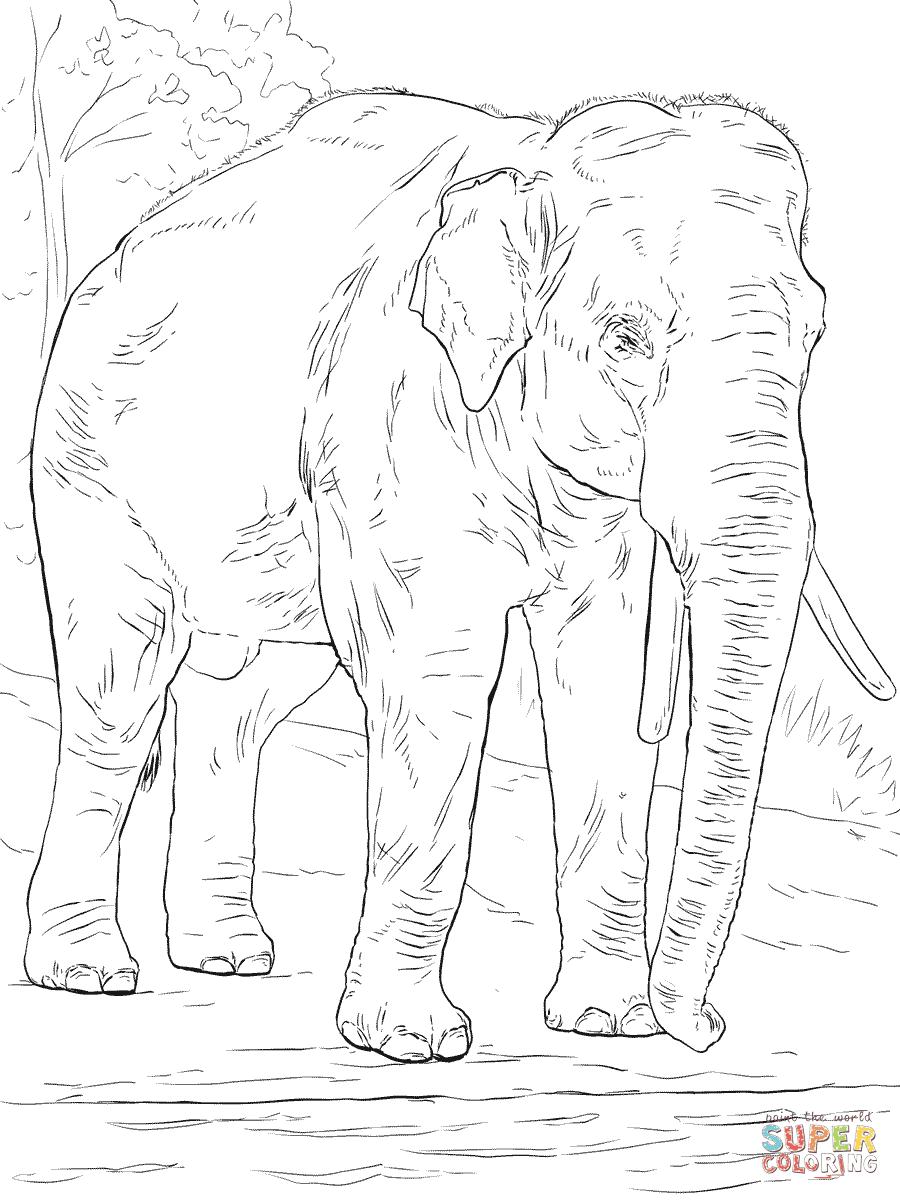 Coloriage Elephant En Ligne | Imprimer et Obtenir une ...