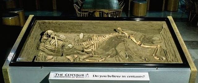 Σκελετός «Κενταύρου» στο φως!