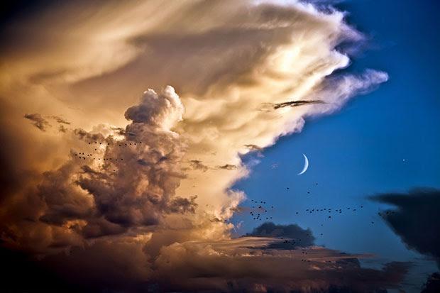 ภาพถ่าย เมฆ นก พระจันทร์ ดาวศุกร์