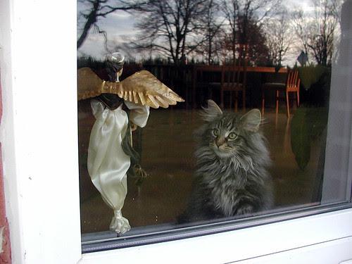 Tommie achter het raam