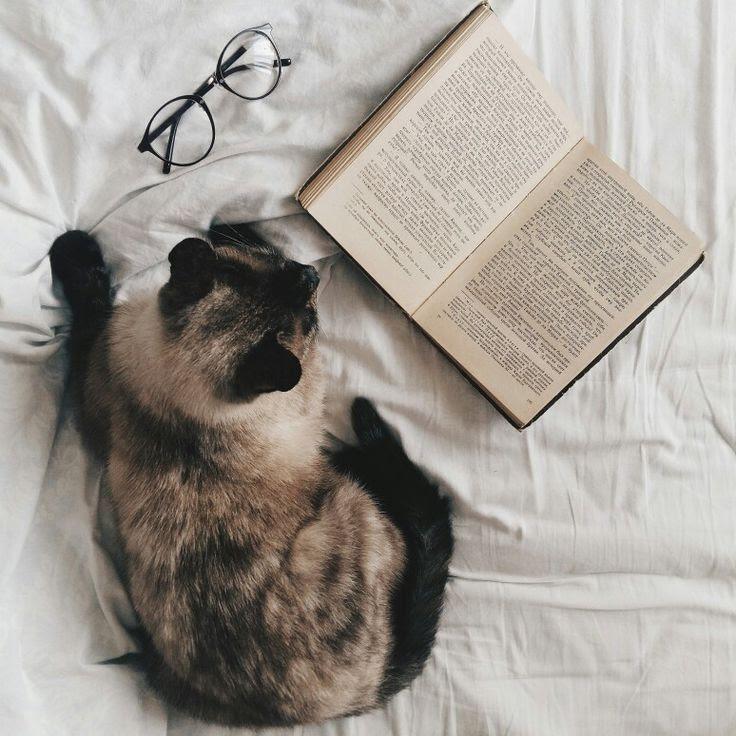 #cat #book #cozy #eyewear #glasses #white #pet #bed #milky ...