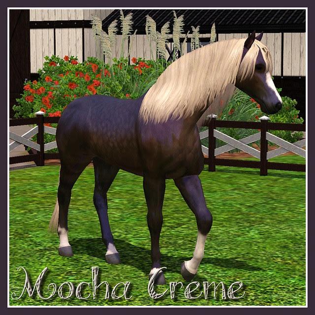 Mocha Creme_covershot02