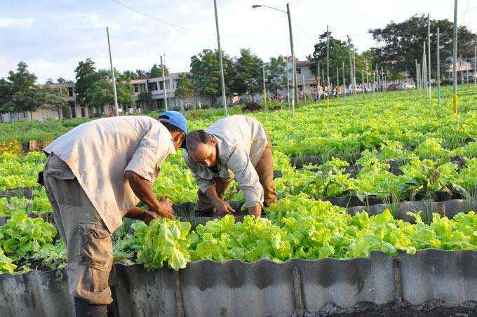 El incremento de la producción de alimentos a través del Grupo de la Agricultura Urbana, Suburbana y Familiar (GNAUSF) es una prioridad en todas las provincias para este año, aseguró este martes en Bayamo Elizabeth Peña Turruellas, directora nacional de ese movimiento.