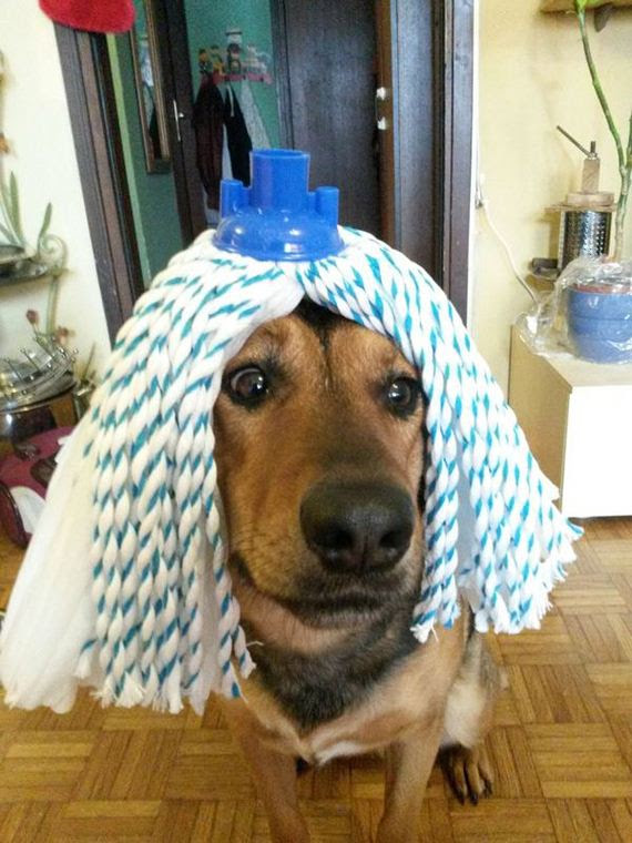 Αξιολάτρευτο-Σκύλοι-Φορώντας