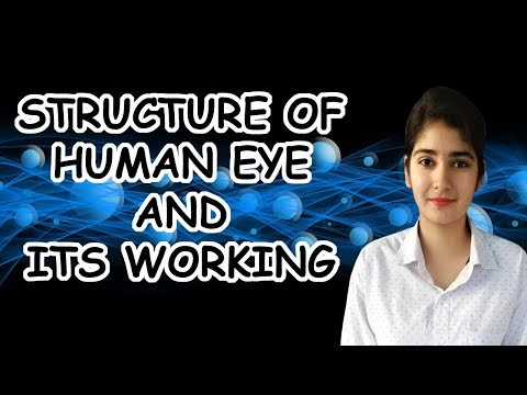Human Eye | Structure Of Human Eye And Its Working | Defects Of Vision  | Physics | 2020