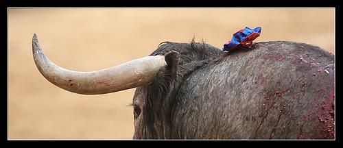 Toro de Victorino