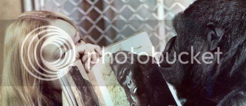 http://i683.photobucket.com/albums/vv199/cinemabecomesher/2012/topkoko-le-gorille-qui-parle500new.jpg