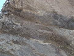 Joggins rock