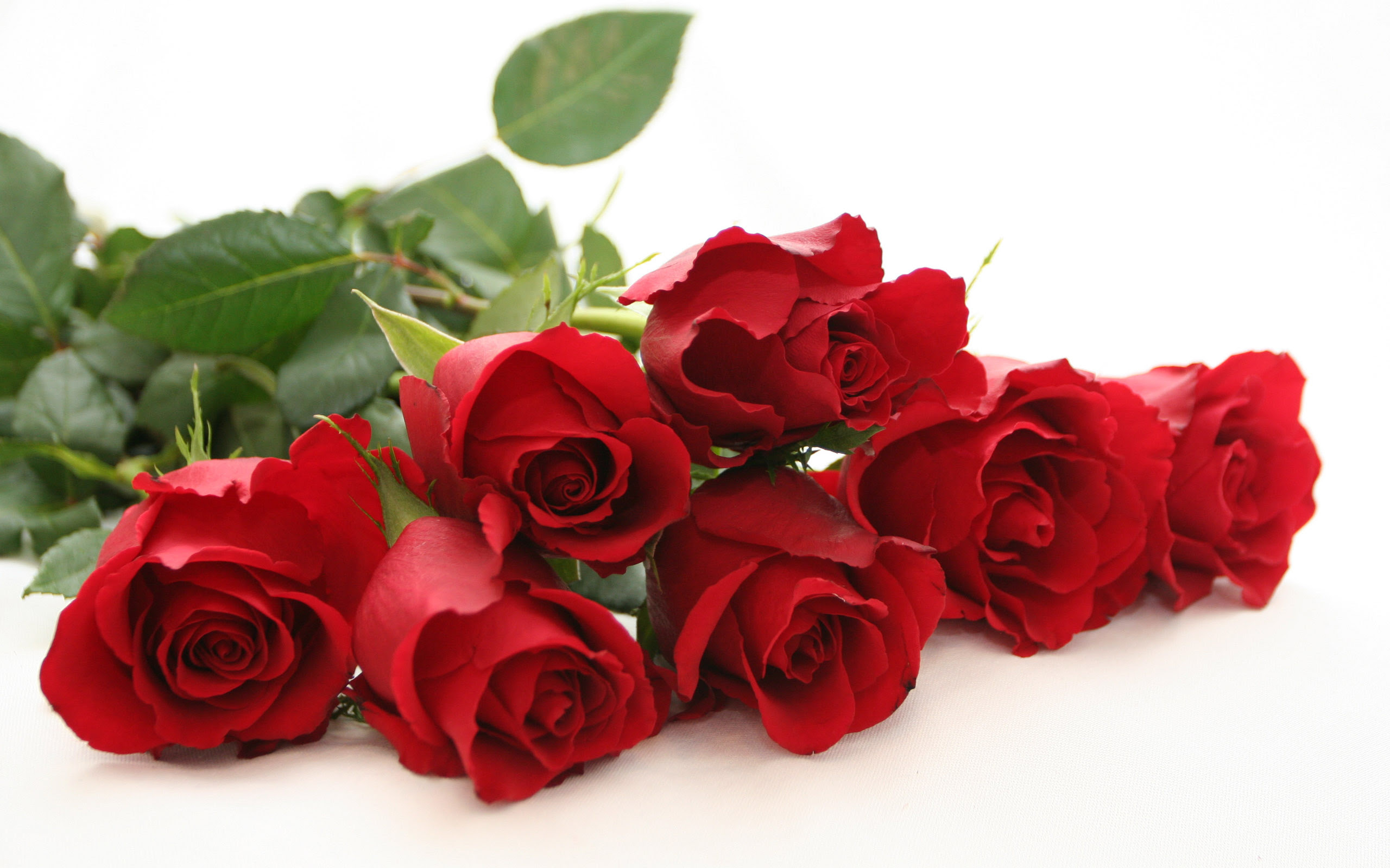 Free Rose Image Download Free Clip Art Free Clip Art On Clipart