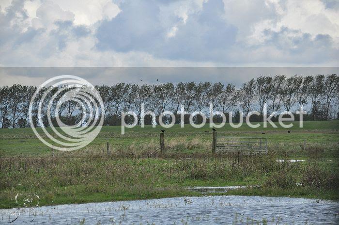 photo 15-10-2013StaatsbosbeheerZuid-Holland260-border.jpg