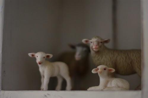 Sheep on the shelf