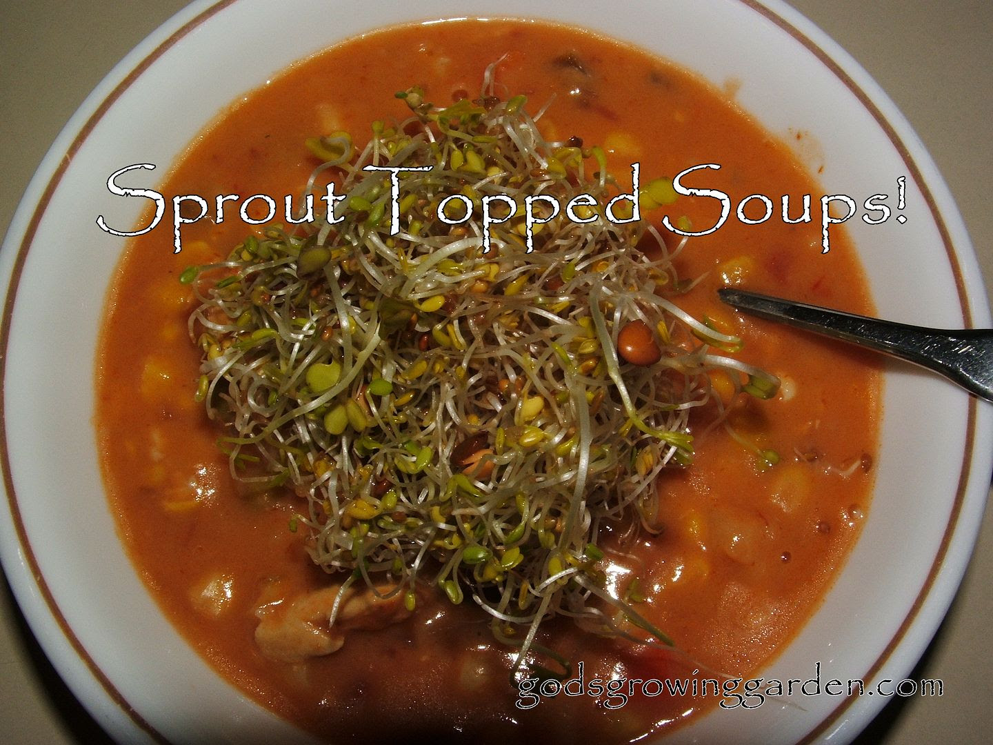 Sprout topped soups by Angie Ouellette-Tower for godsgrowinggarden.com photo 005_zps35fd9c0e.jpg