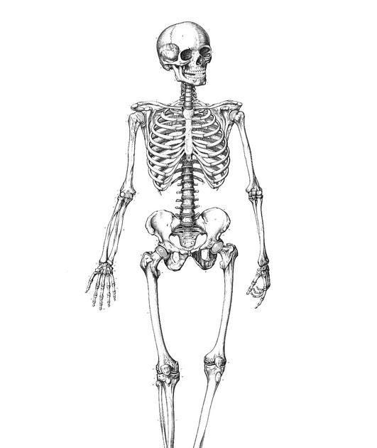 skelett ausmalbild