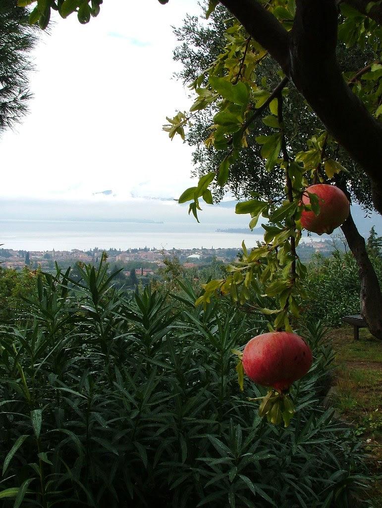 pomegranate - melograne