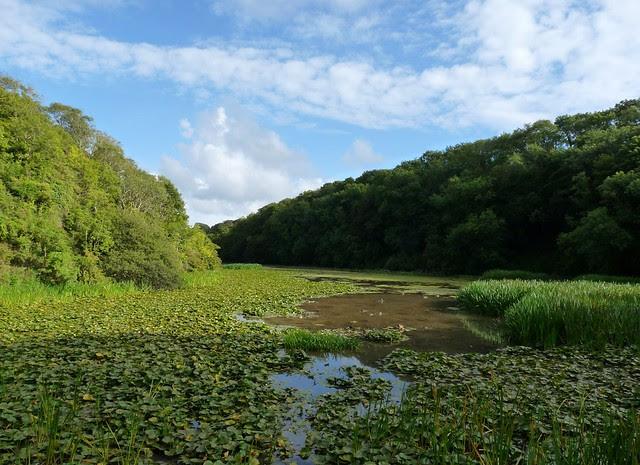 24886 - Boshserston Lily Ponds