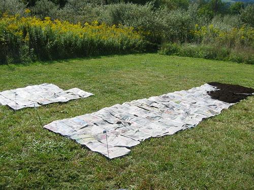 newspaper layer of lasagna garden