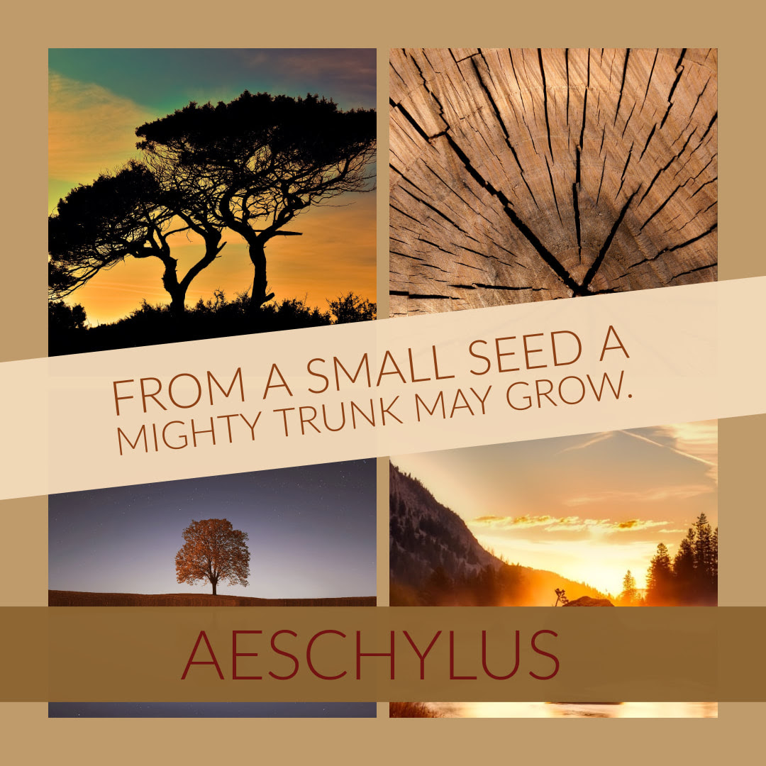The Seed Quote Jms Newsletter