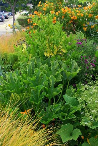 front yard veggies3