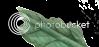Planta Hospedeira