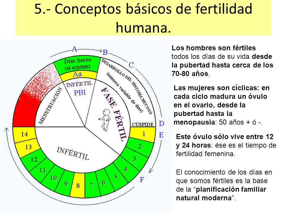 ruleta de dias fertiles