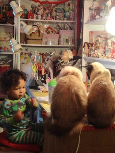 torry and kitties