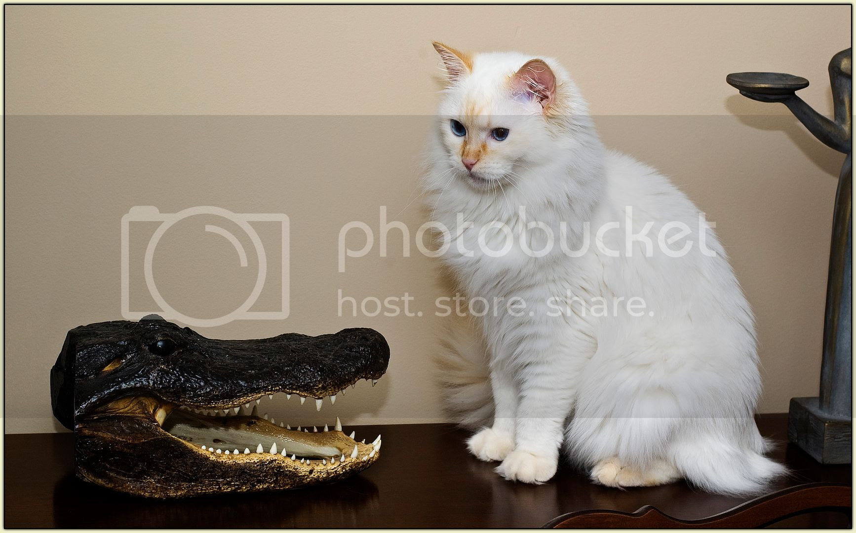 Levon and the Gator (1)
