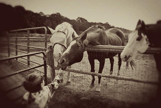 farm-horses2-vintage