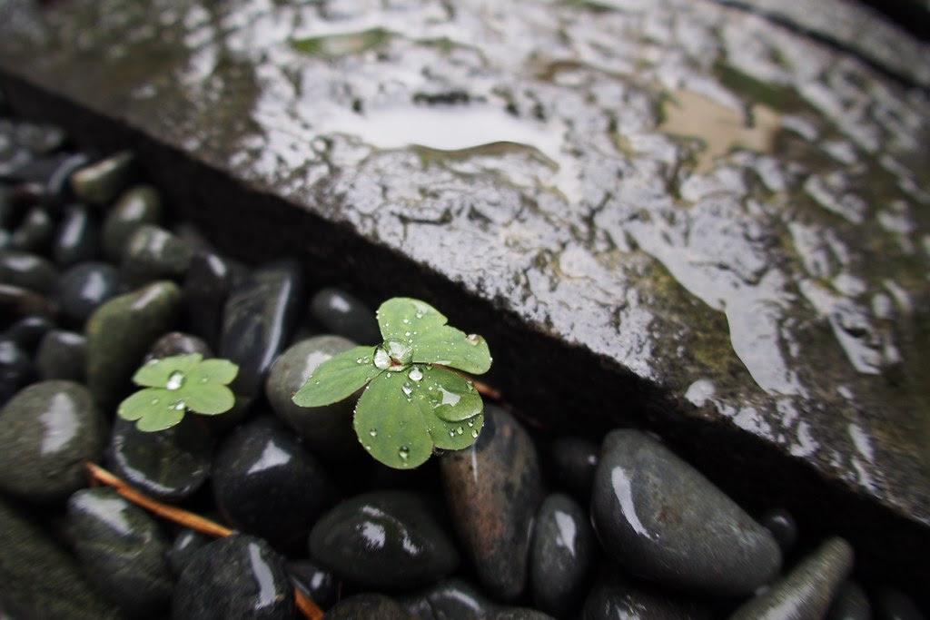 *Lucky Rain