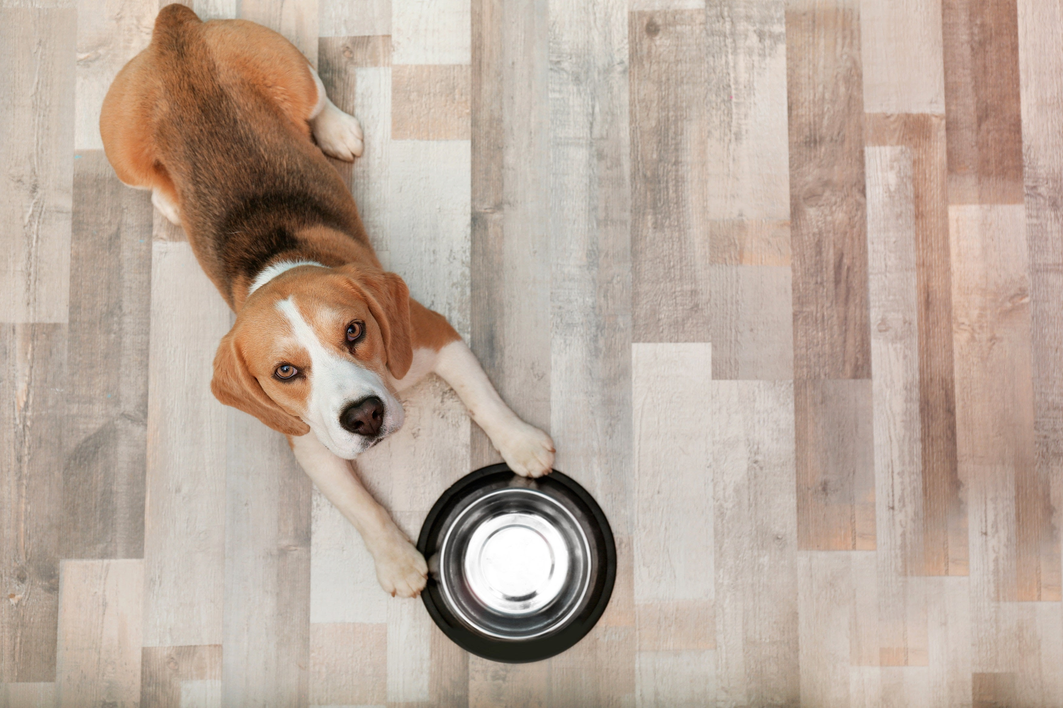 How Long Does it Take a Dog to Digest Food? | PetHonesty