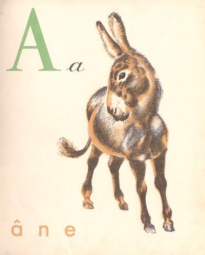 abc castor p1