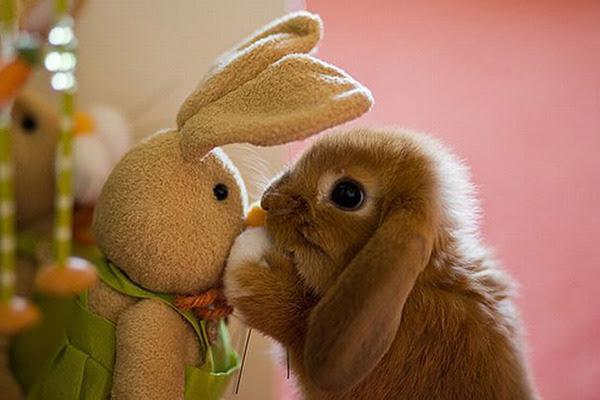 Bildergebnis für cuddling animals