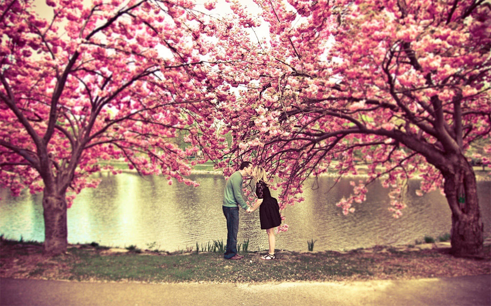 Kiss Under A Cherry Blossom Tree Photo One Big Photo