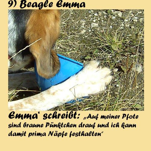 9-Beagle-Emma